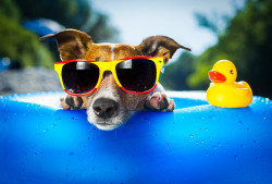 Les gestes pour protéger les animaux des fortes chaleurs