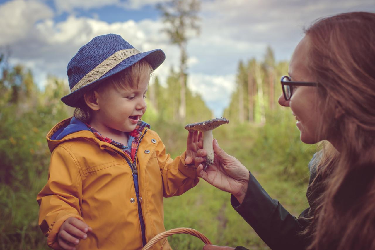 Cueillette des champignons : Attention à l'intoxication alimentaire!