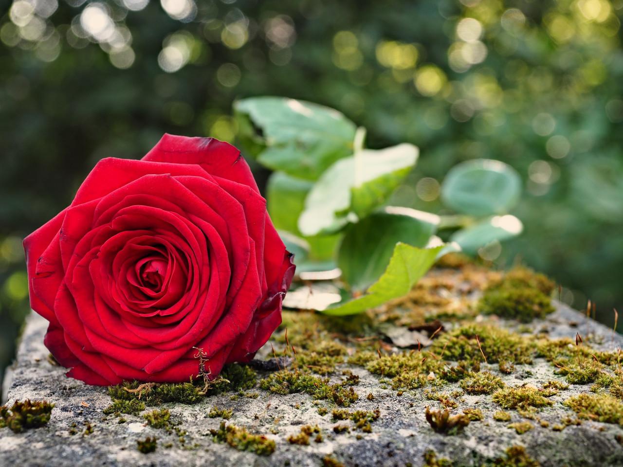 Enterrer un cercueil ou une urne dans une propriété privée : conditions et demande