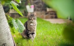 Le statut de chat libre