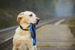 Déclarer la perte ou la mort d'un animal de compagnie