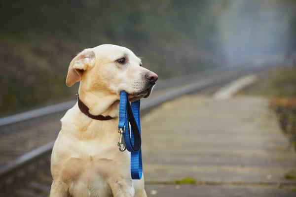 Décès d'un animal de compagnie : démarches à suivre