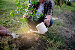 Mettre en place un jardin communautaire partagé