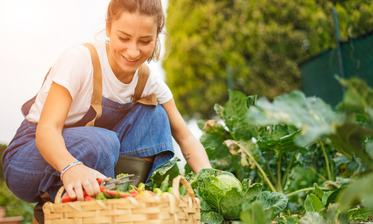 Comment bénéficier d'un jardin ouvrier ou jardin familial&nobreak&?