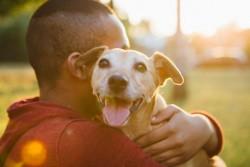 Dénoncer un cas de maltraitance sur un animal