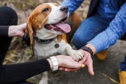 Comment dénoncer un cas de maltraitance sur un ou plusieurs animaux ?