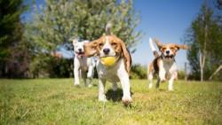 Comment ouvrir un élevage d'animaux domestiques ?