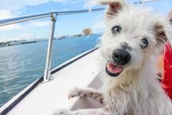 Comment voyager avec un animal domestique ?