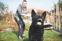 Posséder un chien dangereux
