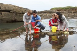 Pratiquer la pêche à pied : s'informer sur la réglementation