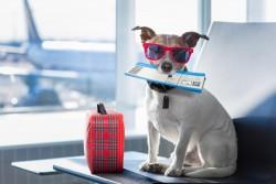 Adoption d'un animal à l'étranger : les démarches à effectuer pour rentrer la France