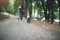 Vacances: laissez votre animal en bonne compagnie