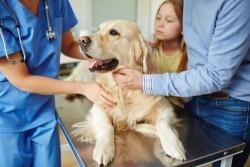Animal domestique : comment se faire rembourser les soins vétérinaires?