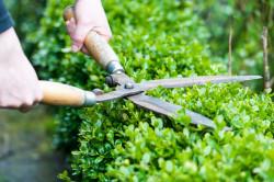 Tailler les haies, élaguer les arbres du voisin : quelles sont les règles à respecter?