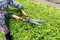 Tailler les haies, élaguer les arbres du jardin : quelles sont les règles à respecter?