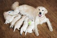Ventes de chiens et chats: les obligations des éleveurs et vendeurs