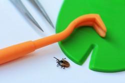Piqûre de tique : Se protéger des morsures