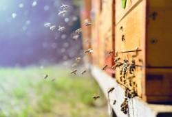 Règles d'installation d'une ruche : déclaration, numéro NAPI